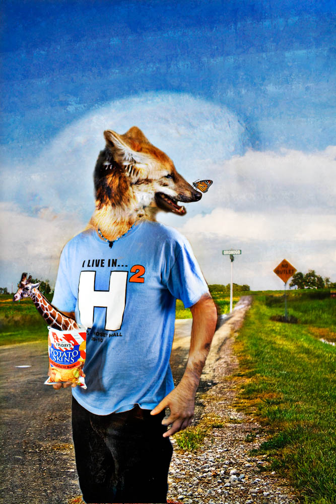 Creative Photography Assignment 3 – Animal People ...