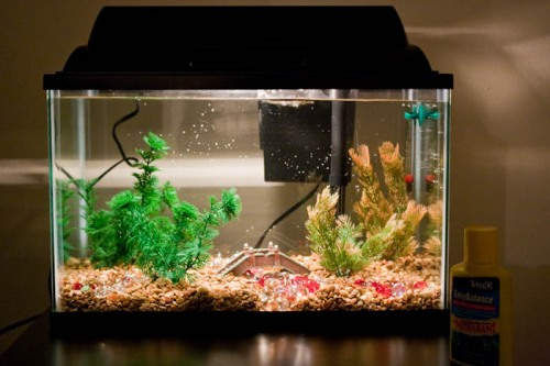 Fish Tank - Stephanie Bibb